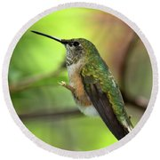 Resting Hummingbird Round Beach Towel