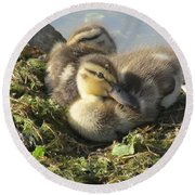 Resting On The Lake Shore. Round Beach Towel