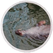 Resting Seal Round Beach Towel