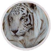 Resting Tiger Round Beach Towel