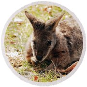 Resting Wallaby Round Beach Towel