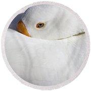 Resting White Goose  Round Beach Towel
