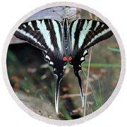 Resting Zebra Swallowtail Butterfly Round Beach Towel