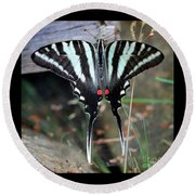 Resting Zebra Swallowtail Butterfly Square Round Beach Towel