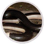 Reticulate Worm Snake Round Beach Towel