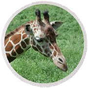 Reticulated Giraffe #3 Round Beach Towel