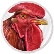 Rhode Island Red Rooster Isolated On White Round Beach Towel