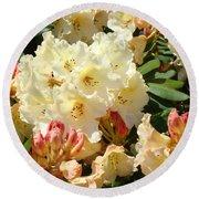 Rhodies Creamy Yellow Orange 3 Rhododendrums Gardens Art Baslee Troutman Round Beach Towel