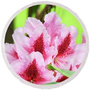 Rhododendron Floral Art Prints Rhodies Flowers Canvas Baslee Troutman Round Beach Towel