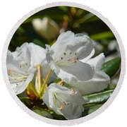 Rhododendron I Round Beach Towel