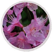 Rhododendron In The Pink Round Beach Towel