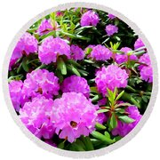 Rhododendrons In Bloom Round Beach Towel