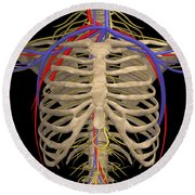 Rib Cage With Nerves, Arteries Round Beach Towel