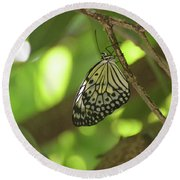Rice Paper Butterfly Clinging To A Tree Branch Round Beach Towel