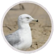Ring-billed Gull Round Beach Towel