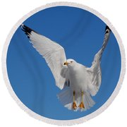 Ring Billed Gull In Flight Round Beach Towel by Mircea Costina Photography