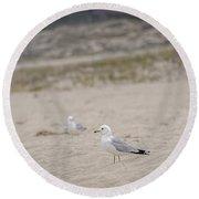 Ring - Billed Gull Round Beach Towel