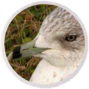 Ring Billed Gull Profile Round Beach Towel