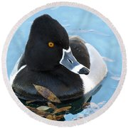 Ring-necked Duck Round Beach Towel