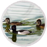Ring-necked Trio Round Beach Towel