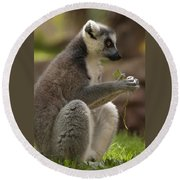 Ring-tailed Lemur Holding A Clump Of Grass Round Beach Towel