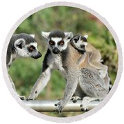 Ring Tailed Lemurs With Baby Round Beach Towel