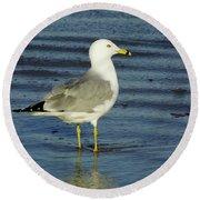 Ringed Billed Sea Gull Round Beach Towel