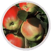 Ripening Apples Round Beach Towel