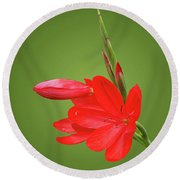 Ritzy Red Round Beach Towel