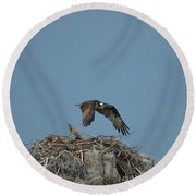 River Hawk Hovering Over A Nest Round Beach Towel