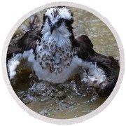 River Hawk Splashing Around In The Water Round Beach Towel