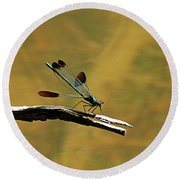 River Jewelwing Round Beach Towel