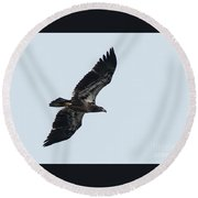 Riverwalk Juvie Bald Eagle Round Beach Towel