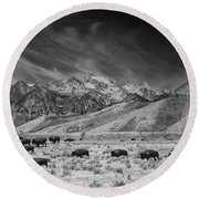 Roaming Bison In Black And White Round Beach Towel