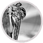 Robber Fly - Black And White Round Beach Towel