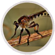 Robber Fly Round Beach Towel