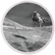Robin In Black And White Round Beach Towel
