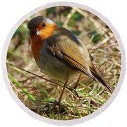 Robin In Hedgerow 3 Round Beach Towel