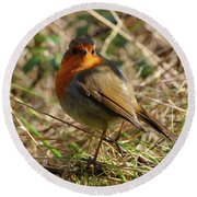 Robin In Hedgerow 2 Inch Donegal Round Beach Towel
