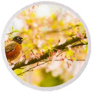 Robin In Spring Blossom Cherry Tree Round Beach Towel