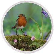 Robin In Spring Wood Round Beach Towel