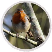Robin On Branch Donegal Round Beach Towel
