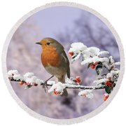 Robin On Cotoneaster With Snow Round Beach Towel