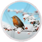 Robin On Snowy Cotoneaster Round Beach Towel