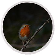Robin On The Branch Round Beach Towel