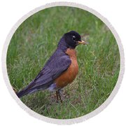 Robin On The Lawn Round Beach Towel