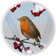 Robin On Winter Cotoneaster Round Beach Towel