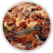 Robin Playing In Fallen Leaves Round Beach Towel