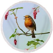 Robin Singing On Flowering Currant Round Beach Towel