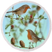 Robins On Larch Round Beach Towel